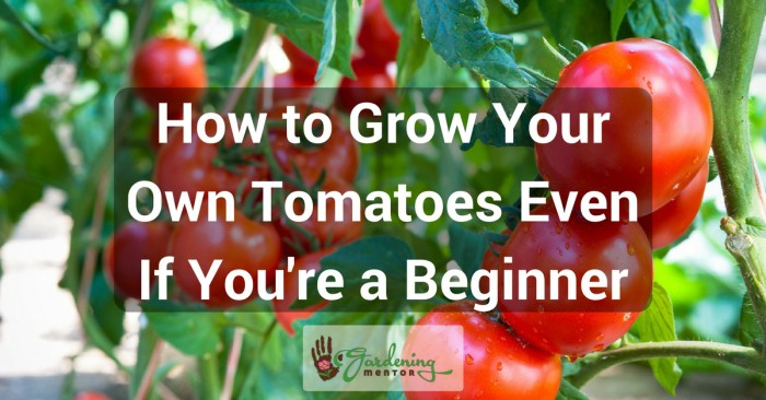 How to grow your own tomatoes even if you're a beginner