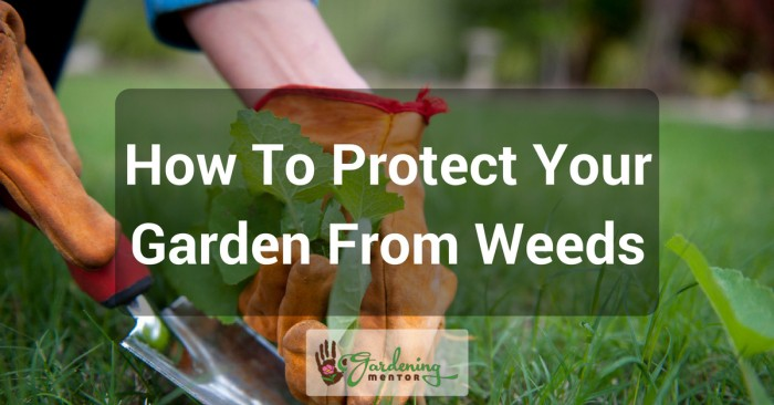 How to protect your garden from weeds