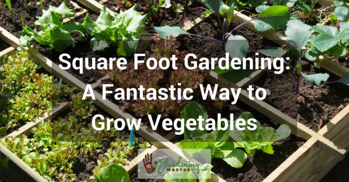 Square Foot Gardening: A fantastic way to grow vegetables