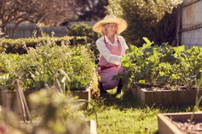Principles of square foot gardening