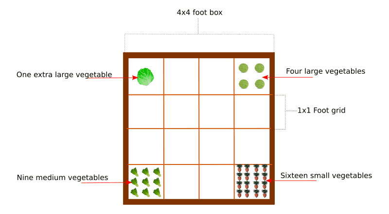 square foot garden planting vegetables