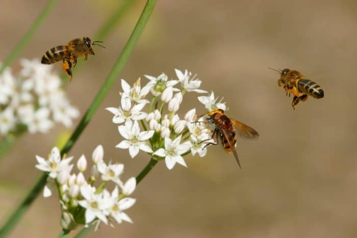 Plants beneficial for bees