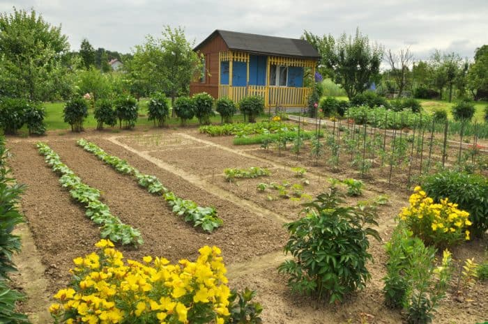 Bee friendly vegetable garden