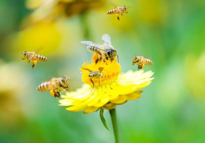 bee gardening