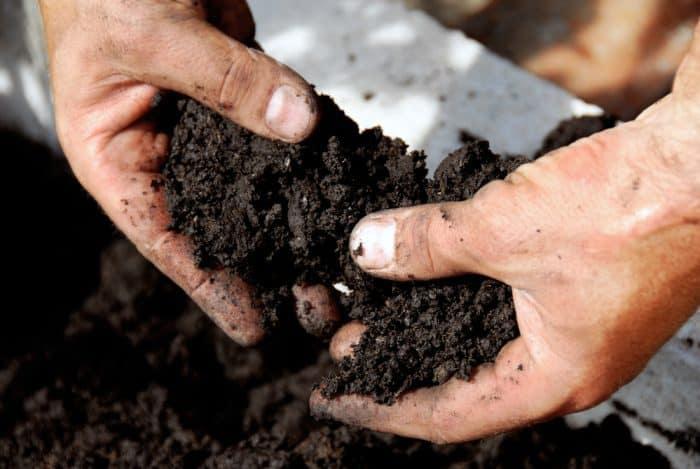 vertical garden soil