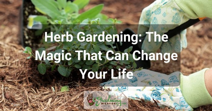 Herb Gardening: The Magic That Can Change Your Life