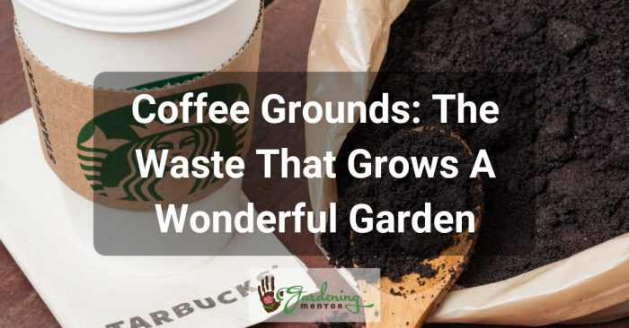 Coffee Grounds: The Waste That Grows A Wonderful Garden