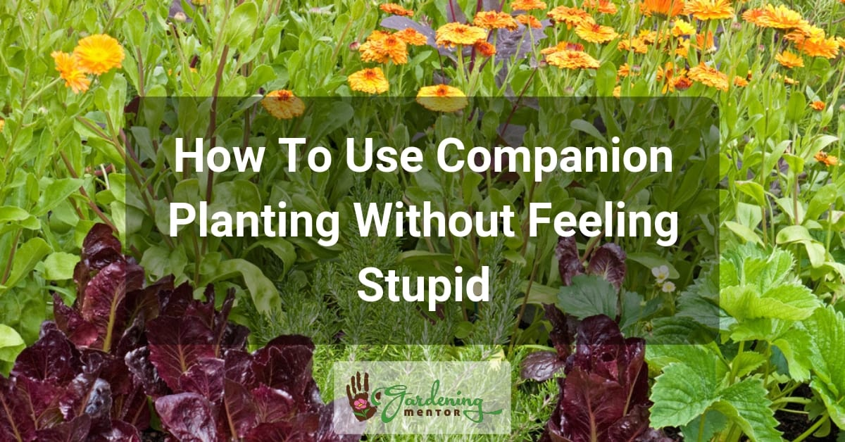How To Use Companion Planting Without Feeling Stupid
