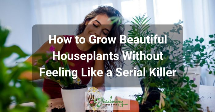 How to Grow Beautiful Houseplants Without Feeling Like a Serial Killer