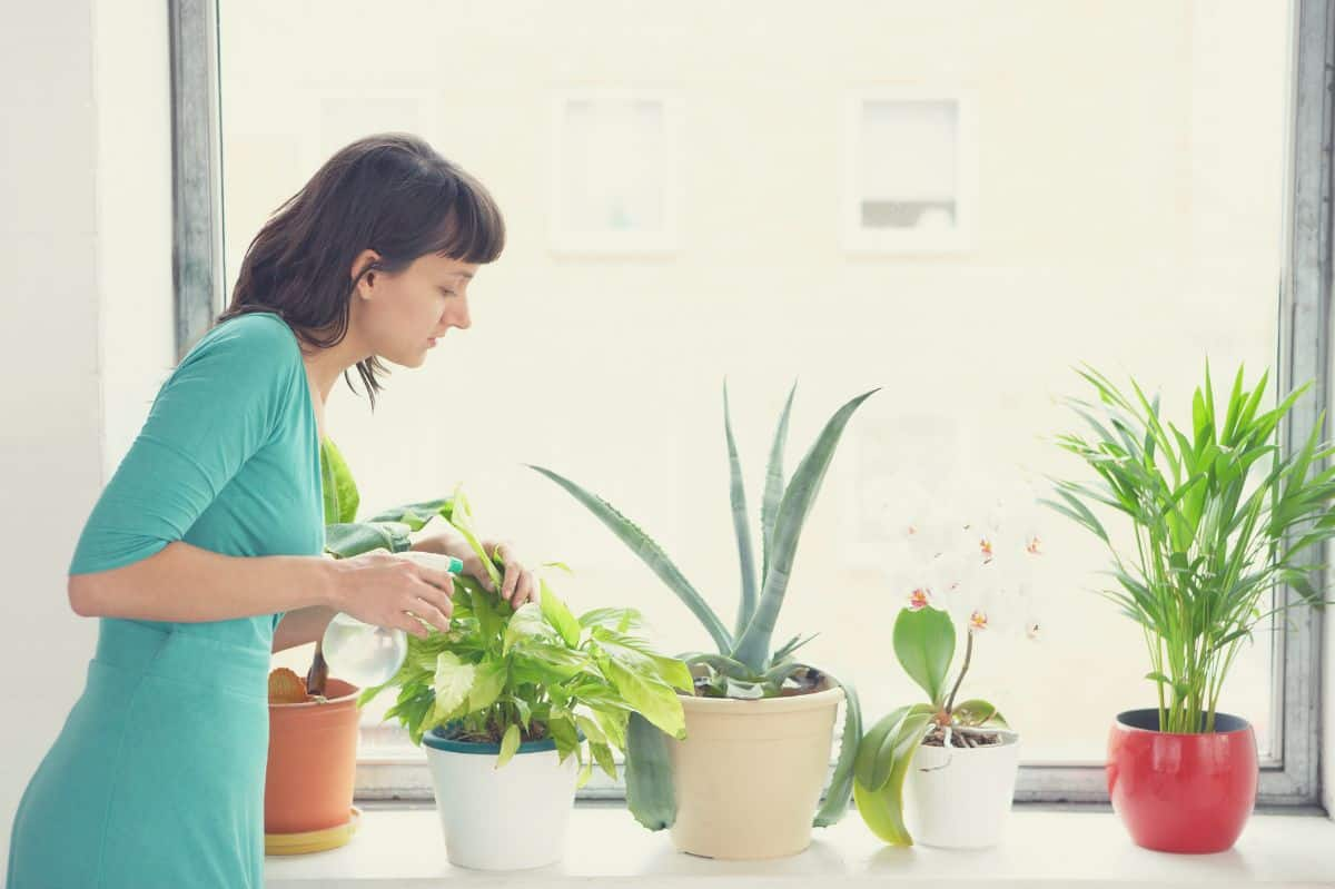 woman growing plants in apartment