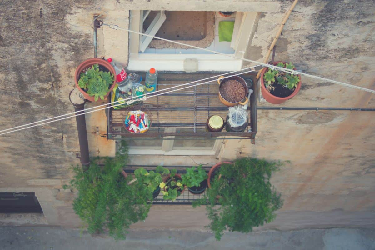 growing plants in containers in a balcony