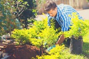 man planting in garden