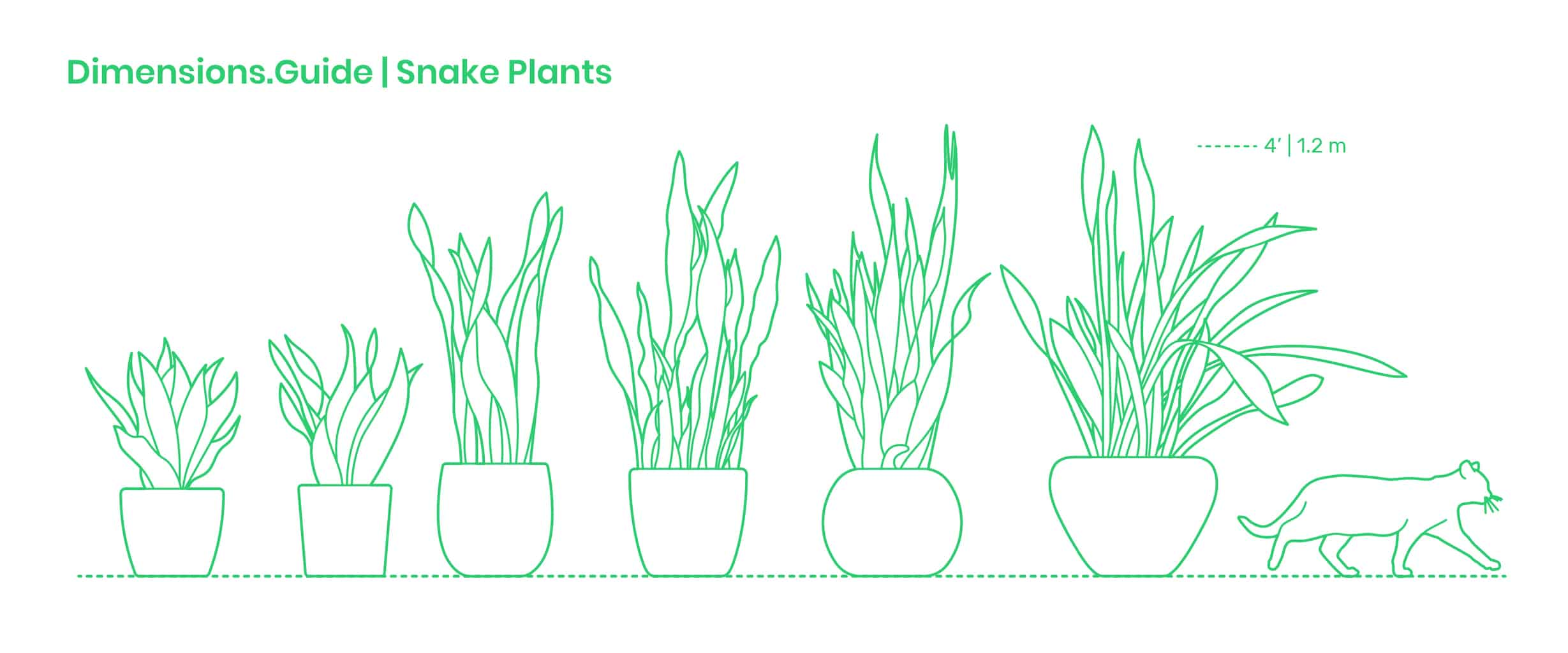 different types of snake plants