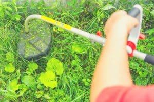 cordless lawn edger in garden