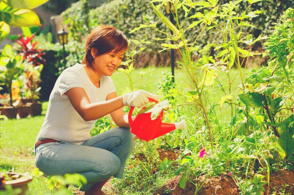 woman watering the garden with watering can