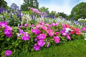 perennial plants in the garden
