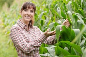 farmer with corn stalks