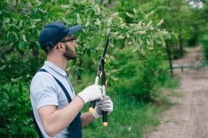 man pruning branches in the garden