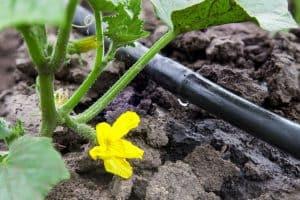 drip irrigation system in the garden