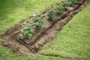 soaker hose in the garden