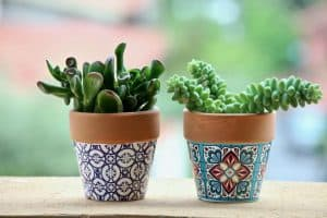 potted plants color